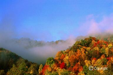 Autumn colors of forest canopy with morning fog