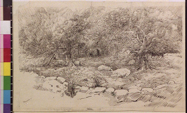[Pigs in orchard with stone fence]