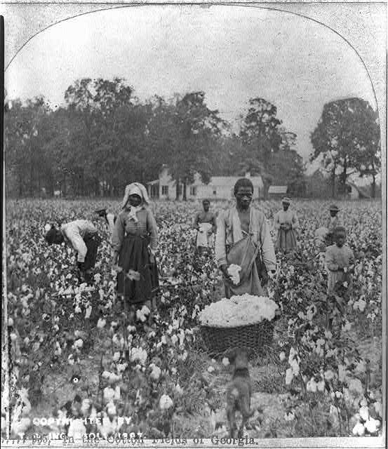 In the cotton fields of Georgia