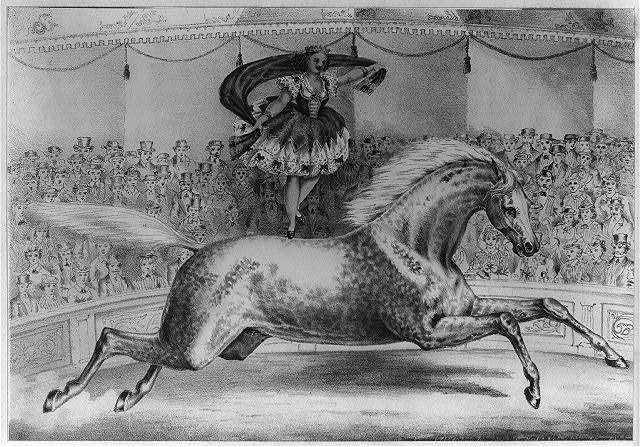[Circus performer standing on the back of a horse]