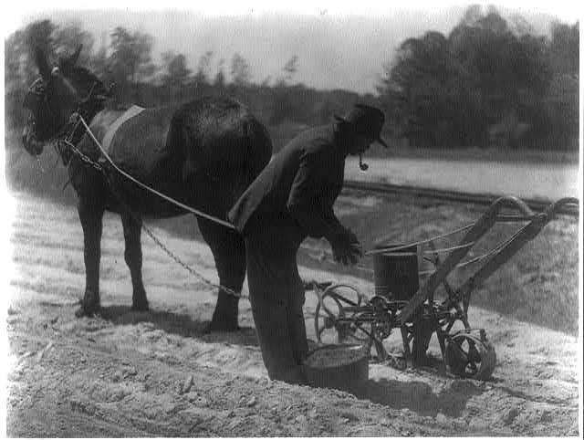 [Negro with cultivator]