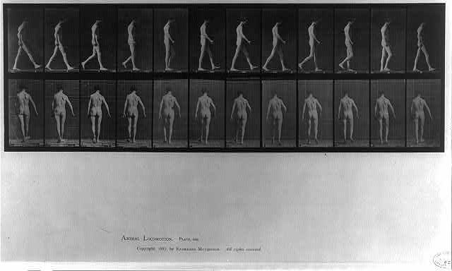Animal Locomotion - side and rear views of man walking (pl. 546)