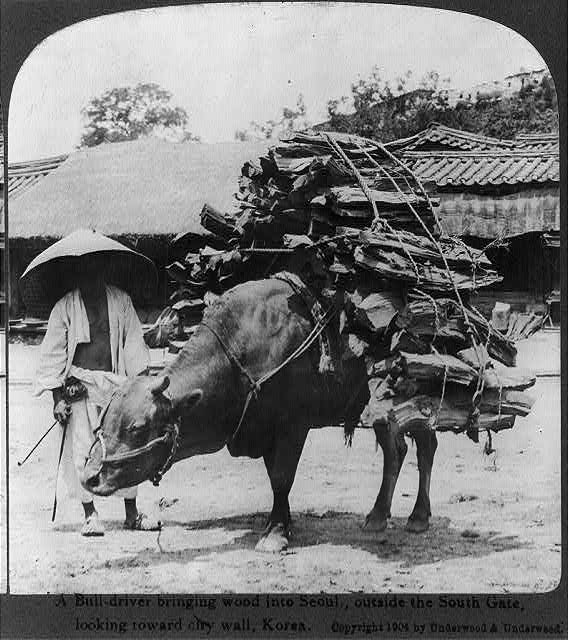 A bull-driver bringing wood into Seoul, outside the South Gate, looking toward city wall, Korea