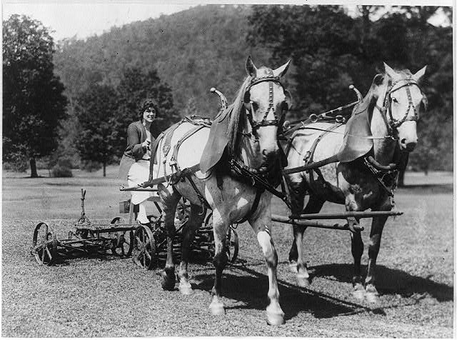 [Evelyn King of Washington cutting the grass with a pair of horses and mower at White Sulphur Springs, West Va.]