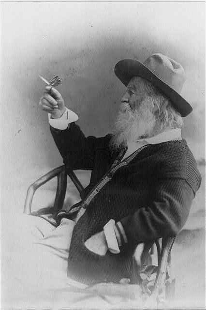 [Walt Whitman, half-length portrait, seated, facing left, wearing hat and sweater, holding butterfly]