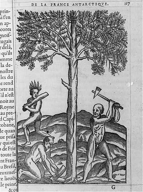 [Natives cutting down tree with ax]