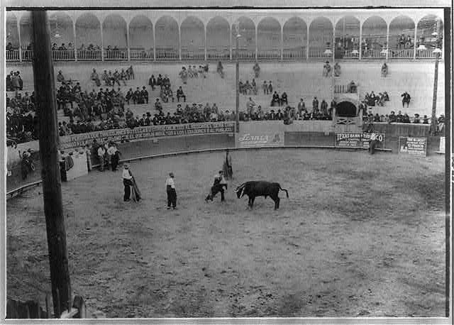 Bull fight, Mexico: matador and bull in arena; bull's head is to left.