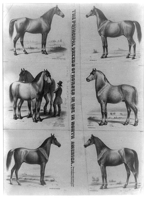 The Principal breeds of horses in use in North America