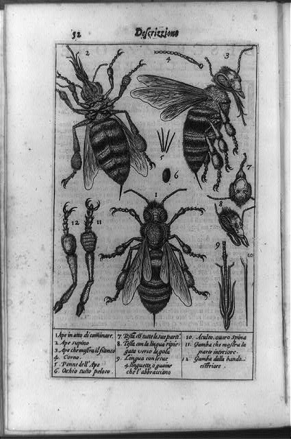 [External anatomy of a bee shown in three full views and various details with key at bottom]