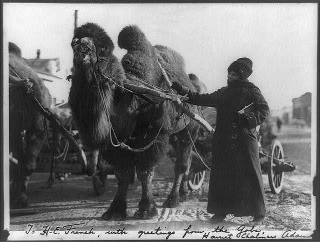 [Harriet Chalmers Adams, with camel pulling cart, Gobi Desert]