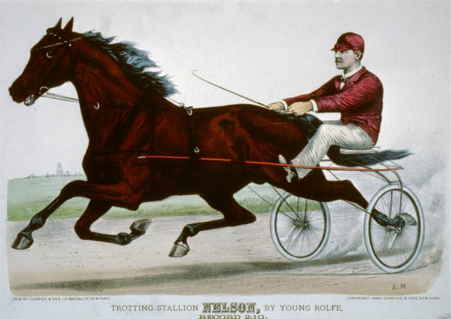 Trotting stallion Nelson, by Young Rolfe: record 2:10