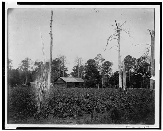 [Farm buildings across field with plants and dead trees in Georgia]