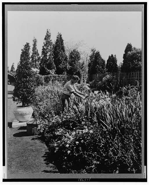 [Gardener tending floral border, posed to illustrate Rudyard Kipling's poem The Glory of the Garden]