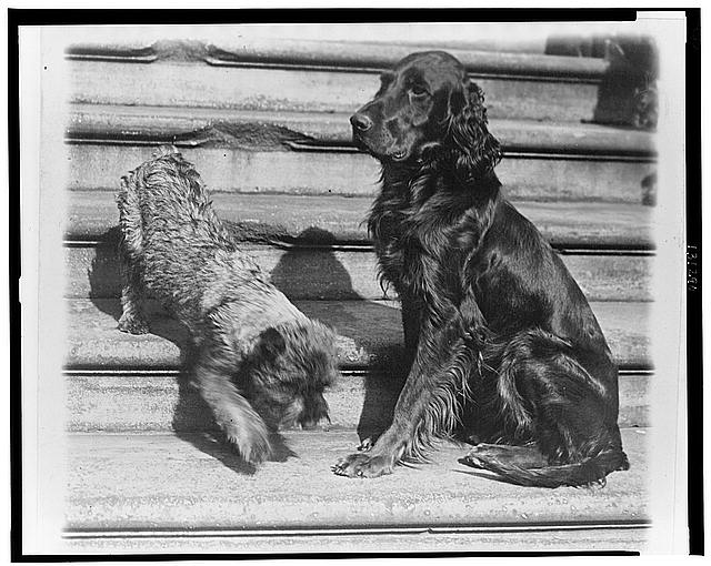 Whoopie and Englehurst Gillette two of the White House dogs with Robert R. Robinson