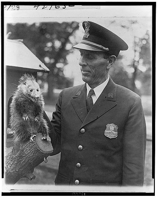 Officer Snodgrass of the White House police force with the latest addition to the Hoover pets - a possum [sic] which recently strayed into the White House grounds
