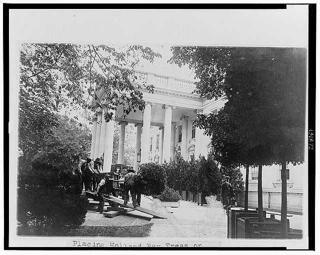 Placing Holland bay trees on the west wing of the White House for the summer season