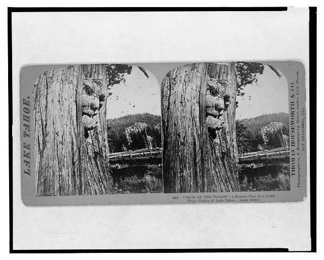 "Lake Tahoe. ""Nick of the woods,"" a human face in a cedar, Valley of Lake Tahoe (near view)"