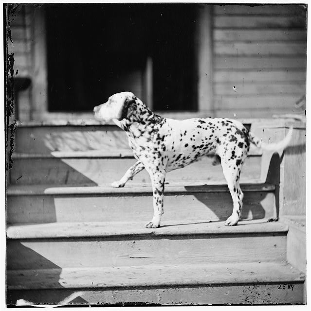 [City Point], Virginia. General Rufus Ingall's coach dog