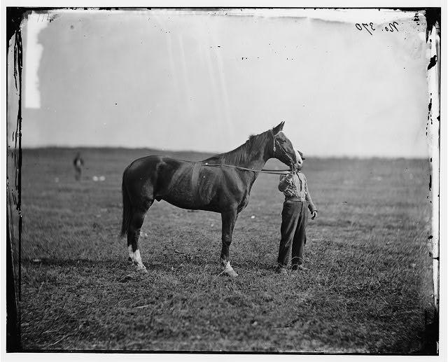 "Culpeper, Virginia. Gen. George G. Meade's horse, ""Baldy"""