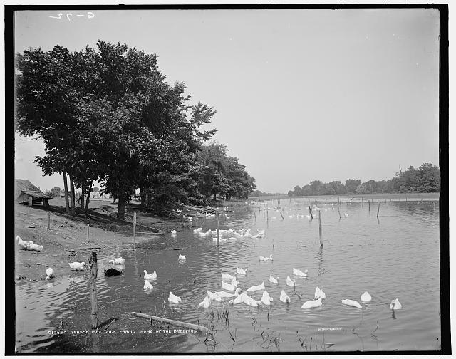 Grosse Isle duck farm, home of the breeders