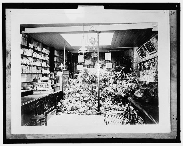 [C.F. Newman and Sons, Seedsmen, Adelaide, Australia]