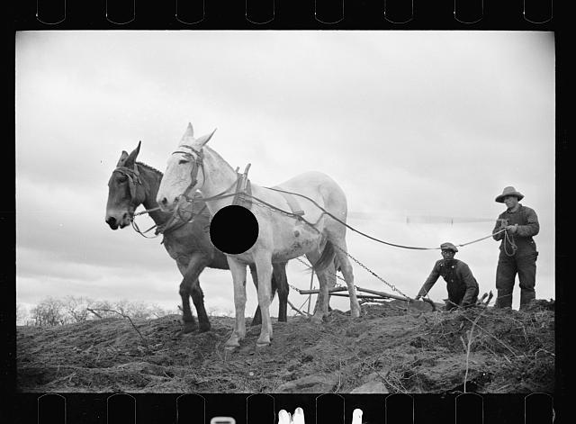 [Untitled photo, possibly related to: Getting fields ready for spring planting, North Carolina]