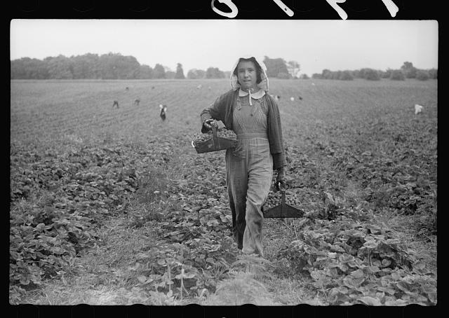 Migrant girl, strawberry picker, Berrien County, Michigan