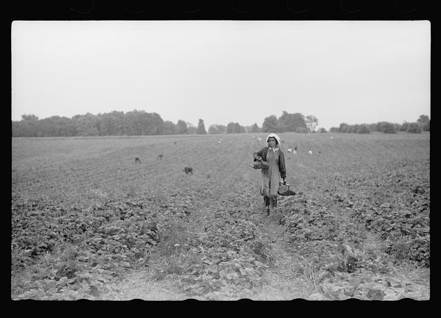 [Untitled photo, possibly related to: Migrant girl, strawberry picker, Berrien County, Mich.]