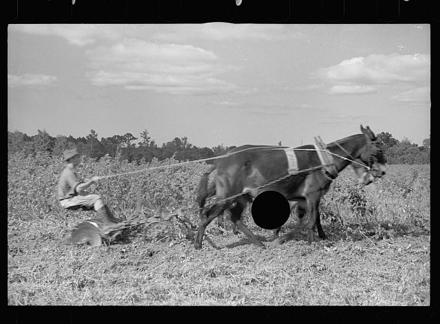 [Untitled photo, possibly related to: Young resettlement farmer with harrow, Grady County, Georgia]