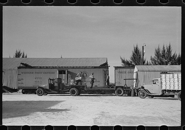 Loading citrus fruit at Fort Pierce, Florida