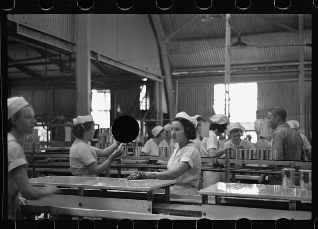 [Untitled photo, possibly related to: Sectioners at work canning grapefruit. About half of these girls are migrants. Winter Haven, Florida]