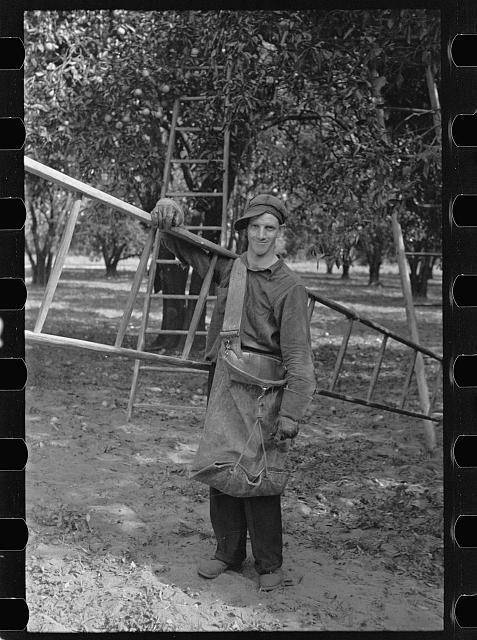 A migrant orange picker, Polk County, Florida