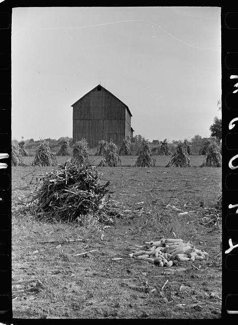 [Untitled photo, possibly related to: Farm laborer with husked corn, Camden County, New Jersey]