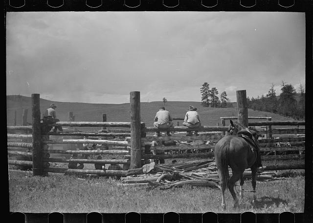[Untitled photo, possibly related to: Branding, Three Circle roundup, Custer National Forest, Montana]