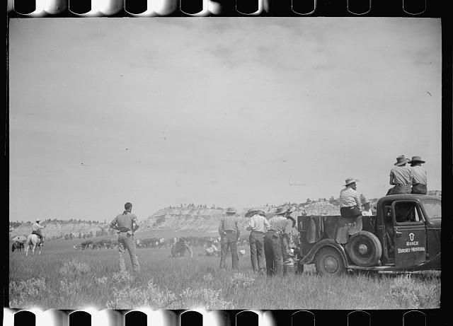 [Untitled photo, possibly related to: Branding at Quarter Circle U Ranch roundup, Montana]