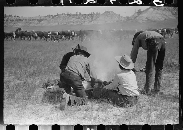 [Untitled photo, possibly related to: Branding, Quarter Circle U Ranch roundup, Montana]