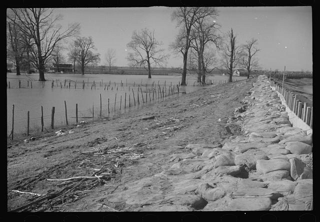 The Bessie Levee augmented with sand bags during the 1937 flood. Near Tiptonville, Tennessee