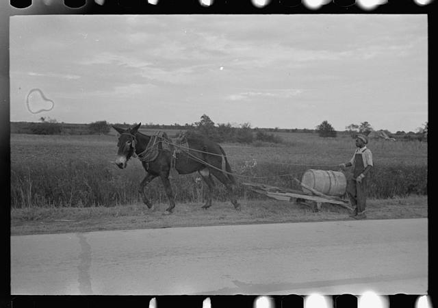 Mule-drawn wagon with water supply near Jeanerette, Louisiana