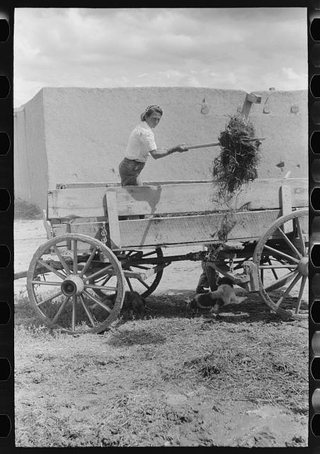 Spanish-American woman pitching straw out of wagon. Straw will be used to make plaster. Chamisal, New Mexico