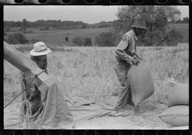 Threshing wheat on farm in Oldham County, Kentucky