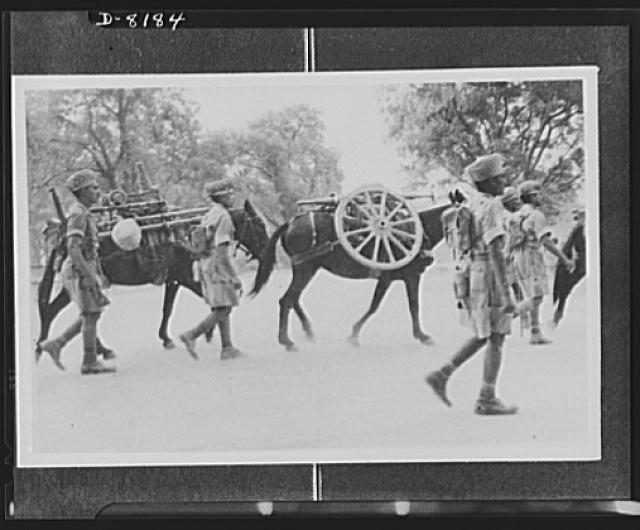 Indian troops in East Africa. Mules used in carrying equipment by Indian Army in East Africa