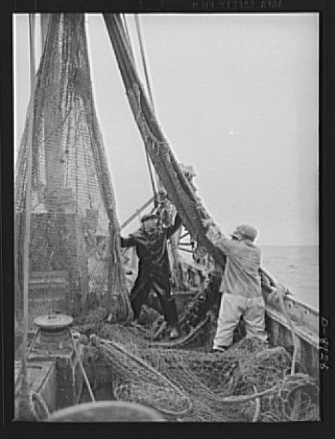 Victory food from American waters. Heavy nets slide down Old Glory's side at fishing grounds off the New England coast where rosefish are being sought. This species of fish can be caught only in daytime