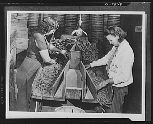 After green peas are picked, they're not shipped hit or miss to the retail stores. They must be sorted and graded before they are packed for shipment; and that's what these two young women are doing. Clean, easy work for women who join the U.S. Crop Corps, and very essential