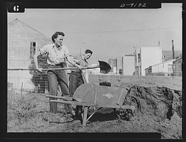 Victory Gardens--for family and country. These Victory Gardeners are transferring good top soil to improve the fertility of their garden. Like all good gardeners, they realize the importance of keeping the soil productive