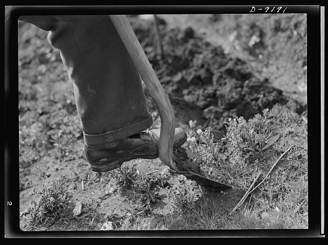 Victory Gardens--for family and country. First step in preparing ground for a Victory Garden is to turn the soil. It is well to spade deeply and as early as possible, choosing a time when the soil is easily worked