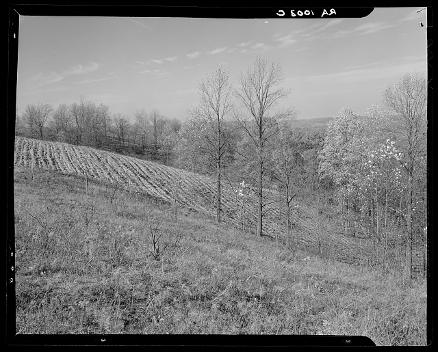 Hillside field which should not be used for farming. Brown County, Indiana