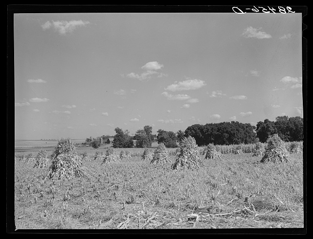 Farm. Grundy County, Iowa