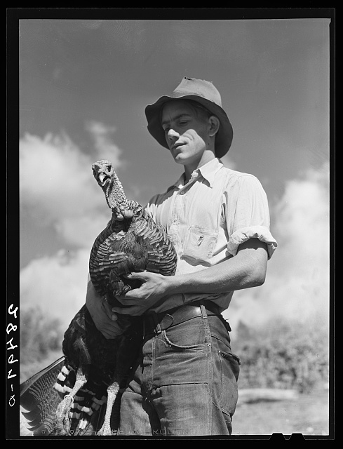 Paul Arnold, son of FSA (Farm Security Administration) client. Chaffee County, Colorado. Herding turkeys
