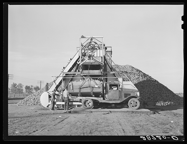 Sugar beets in farmer's truck are unloaded at railroad. Adams County, Colorado