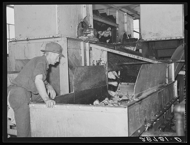 Brighton, Colorado. Inspecting washed sugar beets. Arthur Rothstein